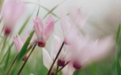Puutarhurin uudet pääsiäiskukat