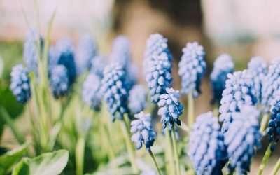 Puutarhan kevättyöt kotitalous-vähennyksellä